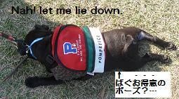 Let me lie down.JPG