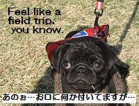 feel like a field trip.JPG