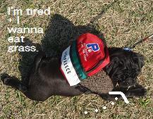tired+eat grass.JPG